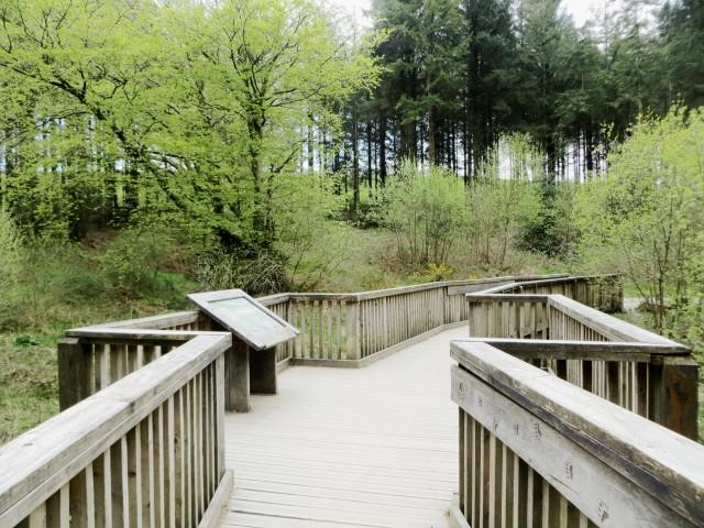 Wooden bridge at Wistlandpound