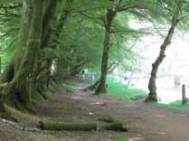 Woodland footpath near Tarr Steps