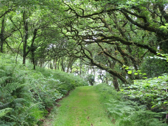 Woodland walk in Six Acre Wood near Valley of the Rocks
