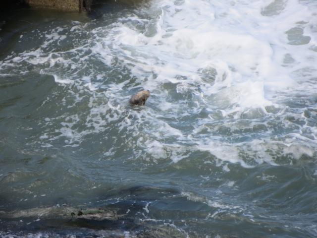 Serene seal amongst the waves