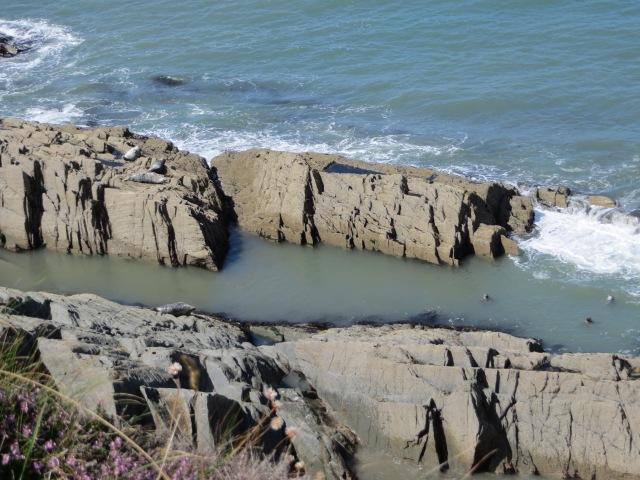 Seven wild seals near Morte Point