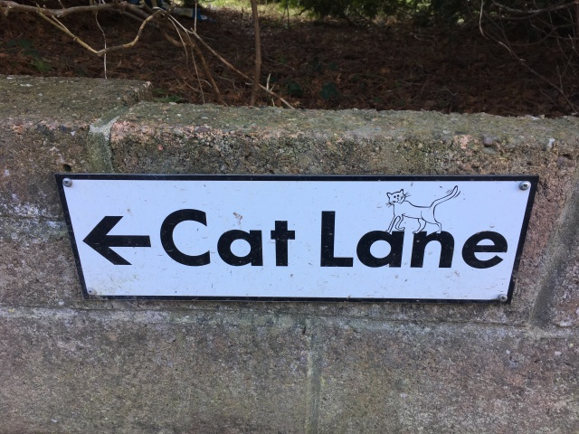 Cat Lane sign near Hele