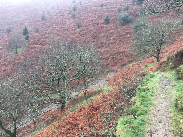 Path down to Heddon's Mouth