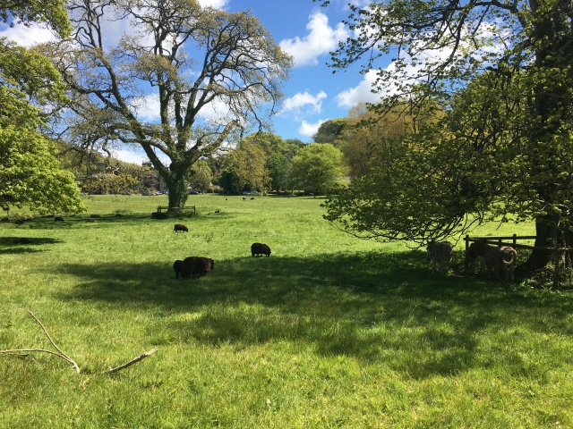 Animals on Hartland Abbey grounds