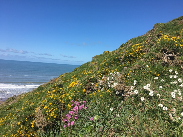 Flowers on South West Coast Path at Hartland