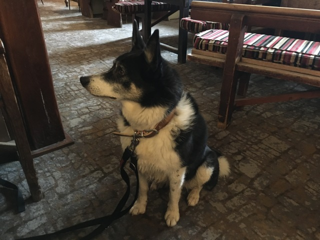 Dog friendly pub on Exmoor, White Horse Inn Exford